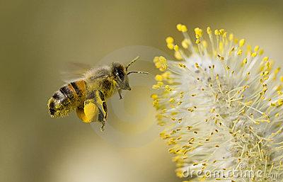 Українські Бджоляри