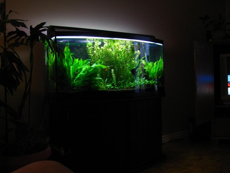 aquariums vendre. Black Bedroom Furniture Sets. Home Design Ideas