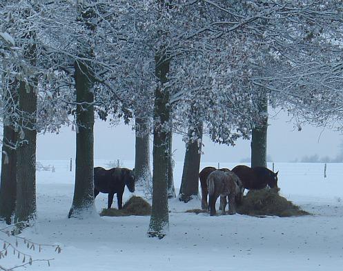 Les chevaux... dans Message du jour 00613