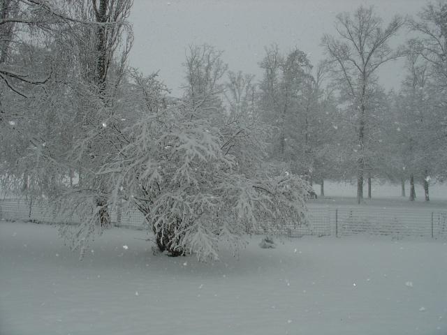 Il neige !  dans Message du jour 00811