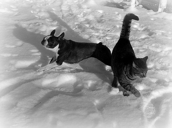 Dog and Cat sur neige !  dans Le Miroir des Chats dsc00510
