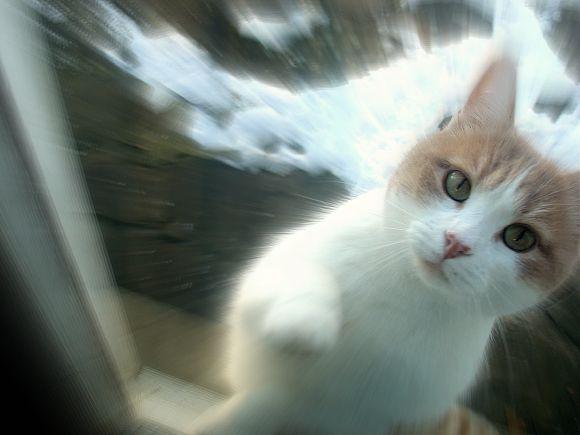 Enfermé dehors !  dans Le Miroir des Chats dsc00611