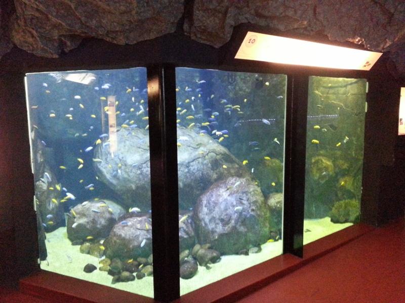 aquarium du grand Lyon : Le troquet