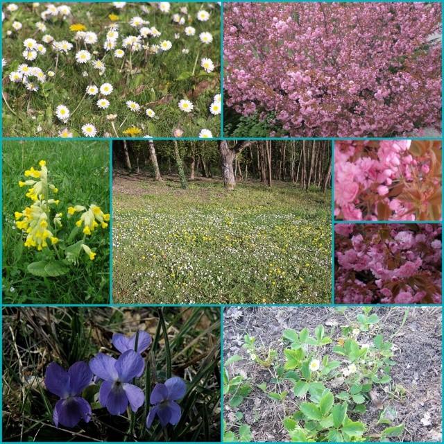 http://i69.servimg.com/u/f69/12/09/41/41/photos16.jpg
