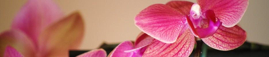 http://i69.servimg.com/u/f69/12/09/76/98/orchid10.jpg