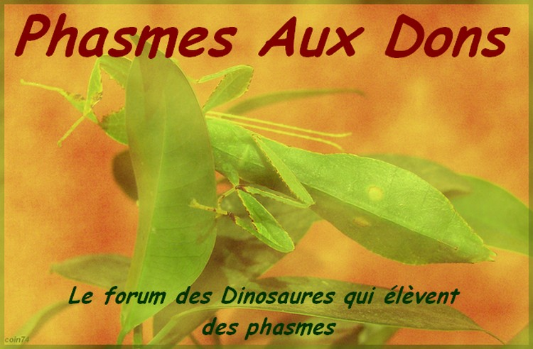 phasmes-aux-dons.forums-actifs.com