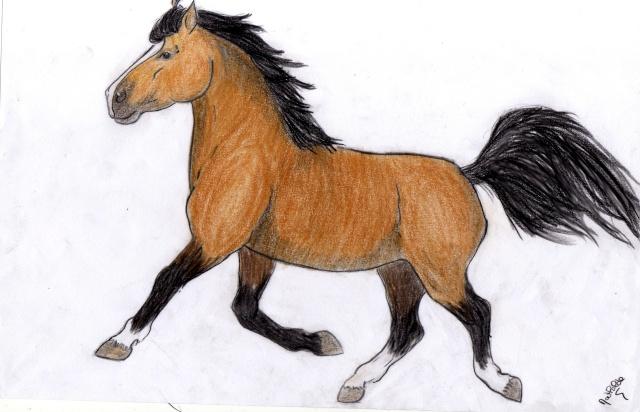 Photo de cheval qui saute a imprimer adobe camera raw - Cheval qui saute dessin ...