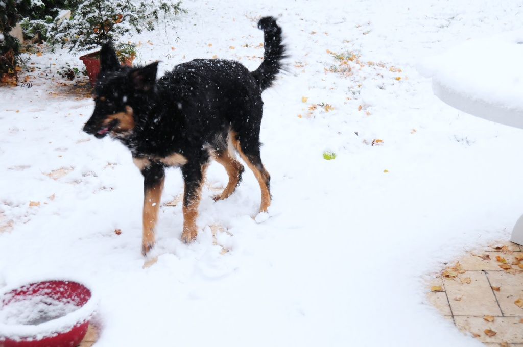 neige_11