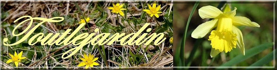 Toutlejardin, forum de jardinage, de joie et de bonne humeur