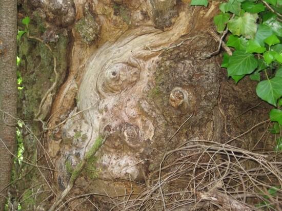 arbres10 dans Nature insolite