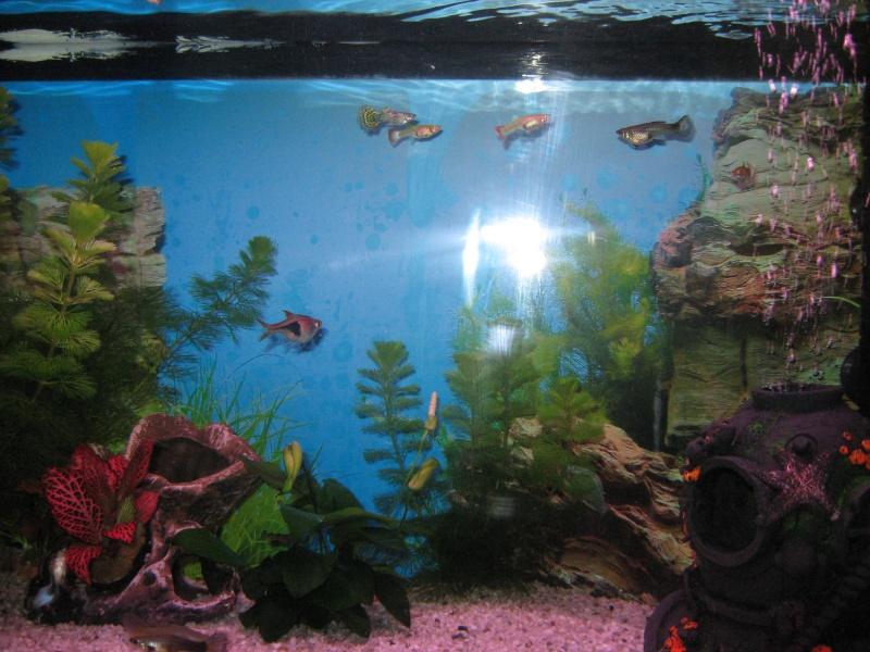 aquarium 10 litre trouvez le meilleur prix sur voir avant d 39 acheter. Black Bedroom Furniture Sets. Home Design Ideas