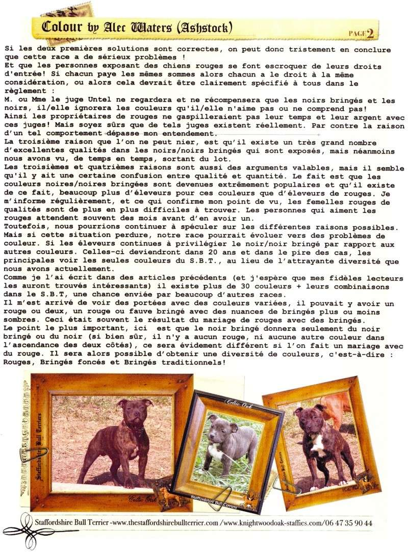 Bull terrier dans le 06