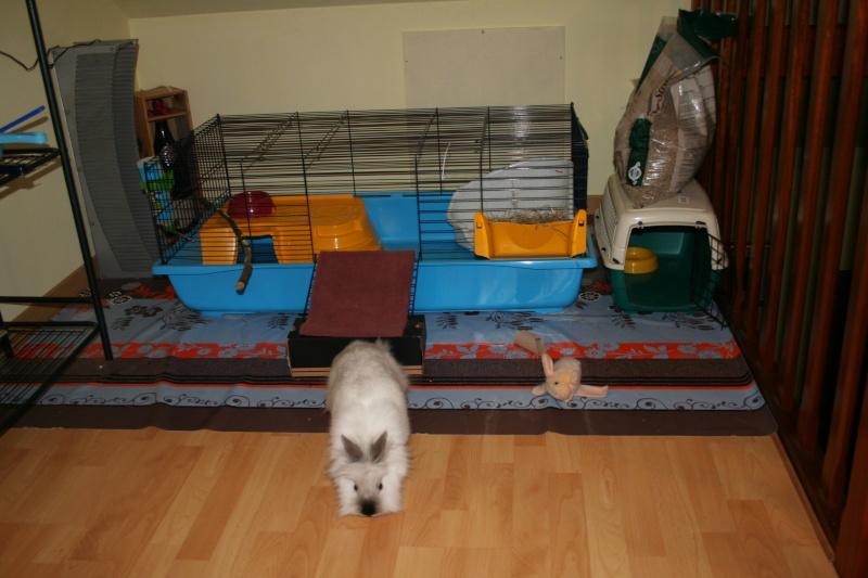 Habitation des lapins exemples de cages enclos page 7 for Enclos lapin interieur