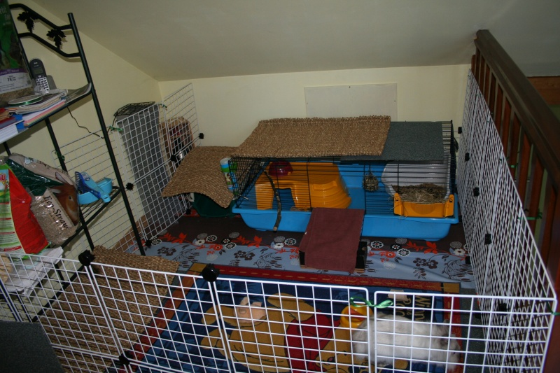 Habitation des lapins exemples de cages enclos page 7 for Abreuvoir lapin fait maison