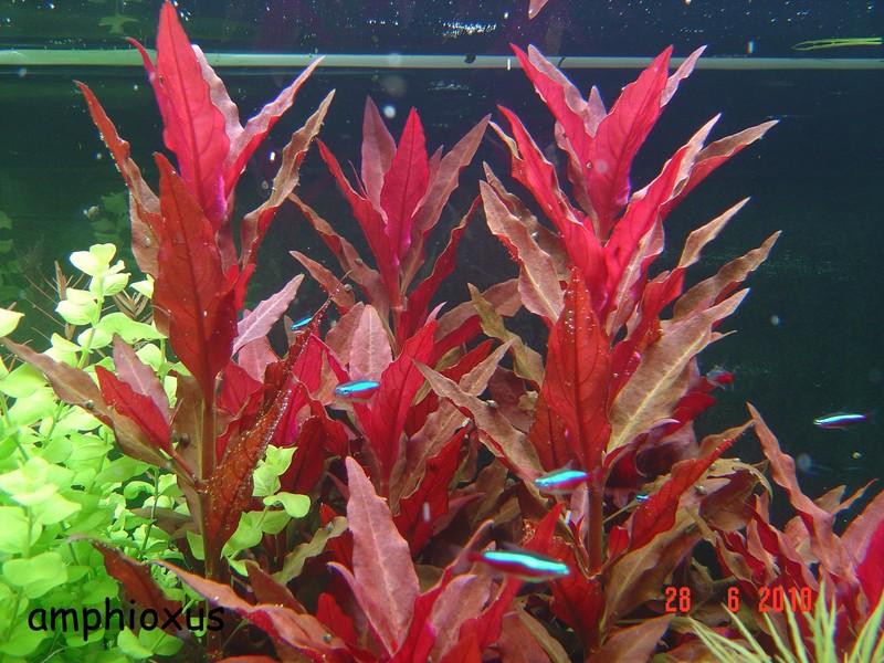 index illustr u00e9 de nos plantes d u0026 39 aquarium