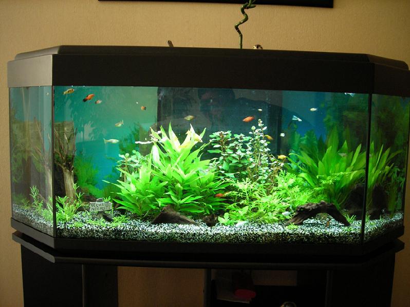 Mamzelle didounne76 mes aquariums 240l et 30l photos for Aquarium 30l combien de poisson rouge