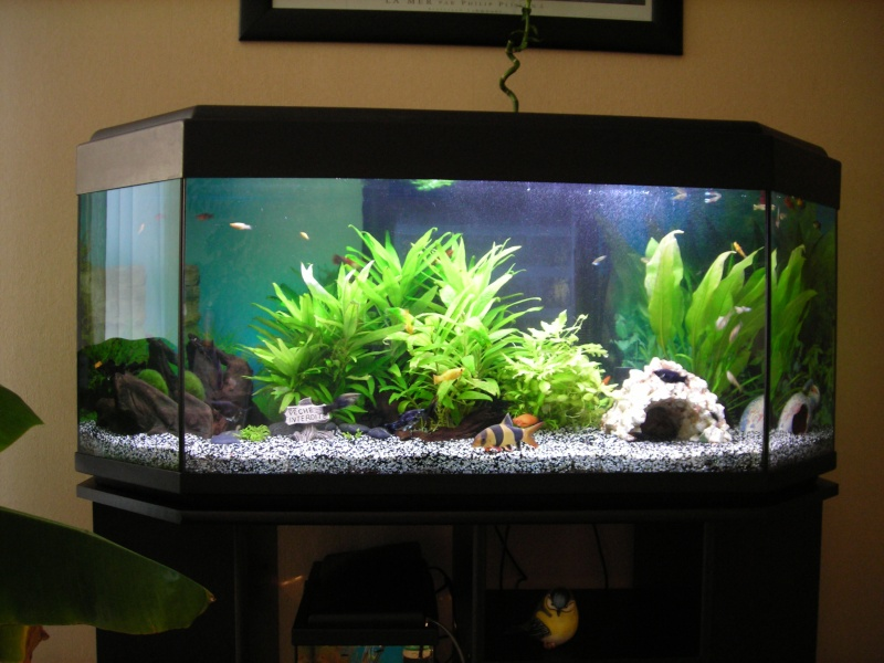 mamzelle didounne76 mes aquariums 240l et 30l photos. Black Bedroom Furniture Sets. Home Design Ideas