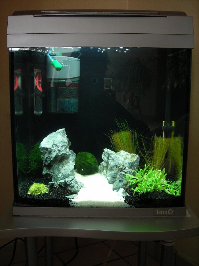 mamzelle didounne76 mes aquariums 240l et 30l photos aquariophilie org
