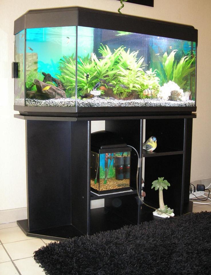 aide choix plante facile pour aquarium 240l. Black Bedroom Furniture Sets. Home Design Ideas