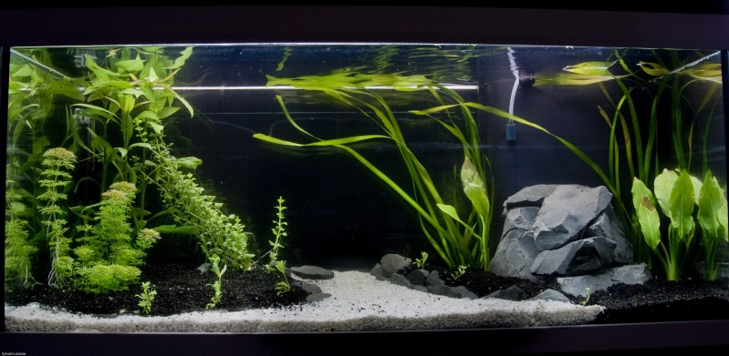 Mon premier aquarium 180l for Sable pour aquarium
