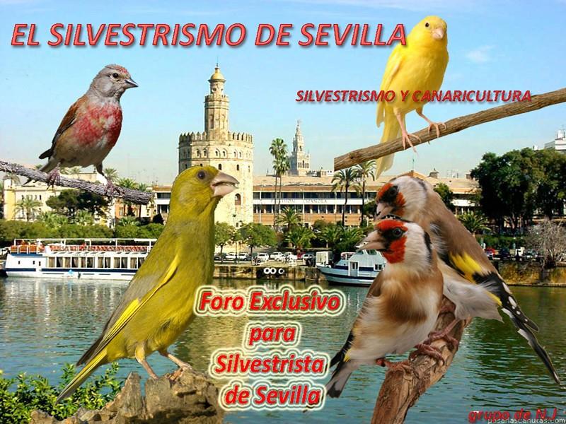EL SILVESTRISMO DE SEVILLA .com