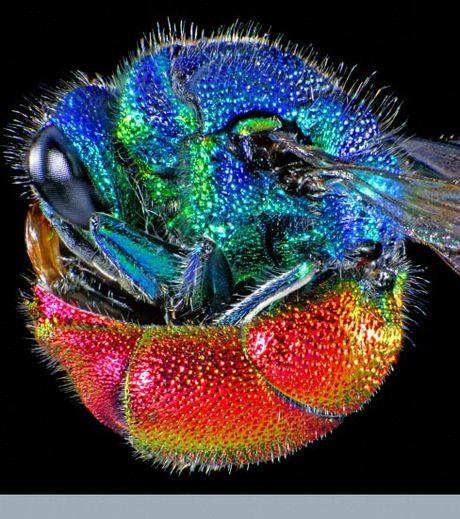 Les plus belles images de science primées aux Wellcome Image awards ...