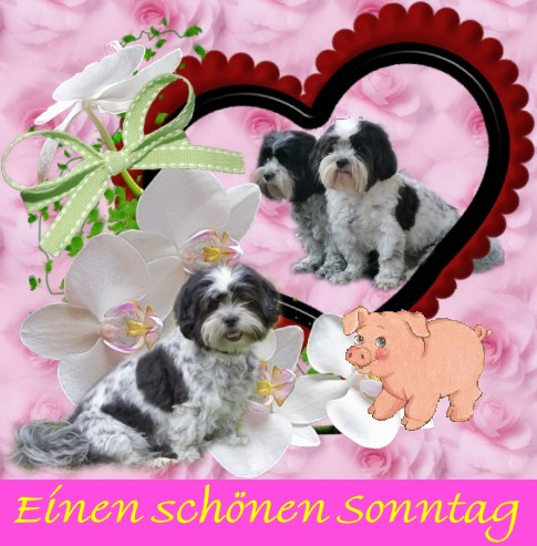An den Beitrag angehängtes Bild: http://i69.servimg.com/u/f69/15/87/50/37/sonnta11.jpg