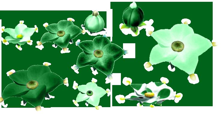 http://i69.servimg.com/u/f69/15/89/51/93/fleur10.png