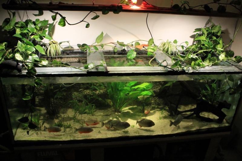Projet mur v g tal au dessus aquarium for Mur vegetal aquarium