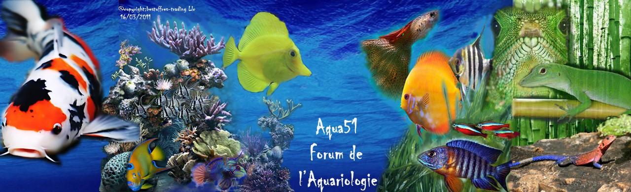 Aqua51, Récifaliste, Eau de mer, Eau douce et Terrarium