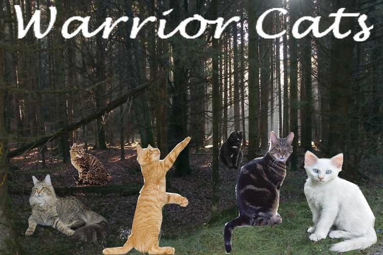 Warrior Cats Rpg Sonnenclan