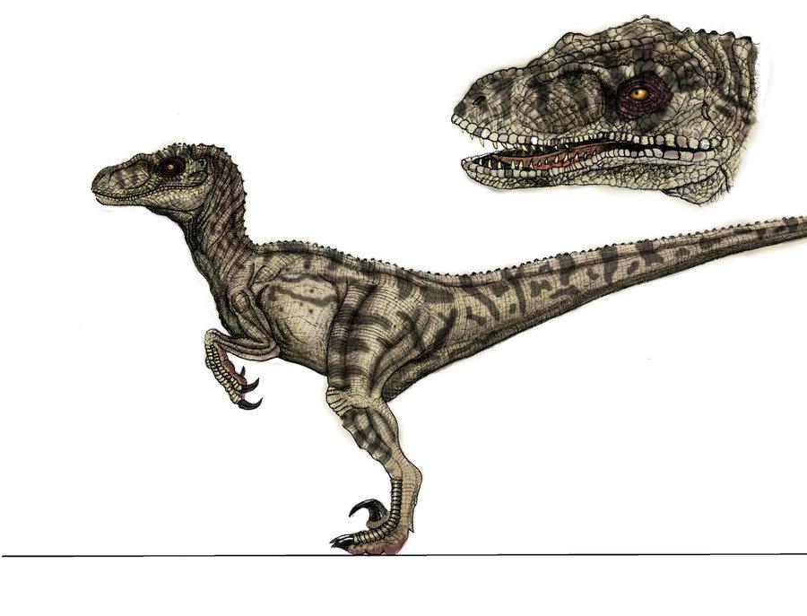 raptor11.jpg