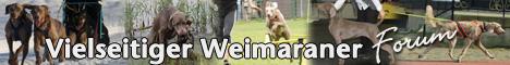Das Weimaraner-Forum ist eine Plattform zum Austausch von Erfahrungen, Erfolgen und Fragen rund um den grossen grauen Allrounder.