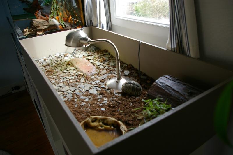 lampe chauffante pour tortue. Black Bedroom Furniture Sets. Home Design Ideas