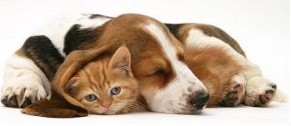 ШМЕЛЬ и БОНУС. Форум помощи бездомным животным