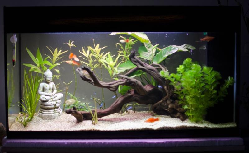 plantes qui noircissent aquarium 100l page 3. Black Bedroom Furniture Sets. Home Design Ideas
